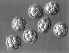 A 3 day embryo is usually at the 6-8 cell stage